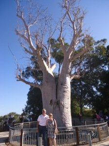 Kings Park at the Upside down Tree