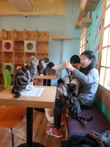 Cat cafe- being abandoned for cooked chicken!