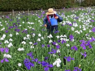 Lily Garden