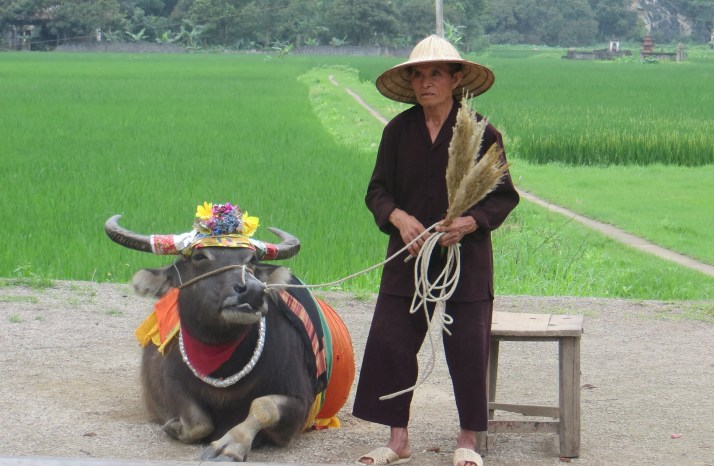 Woman and her Buffalo in Hoa Lu