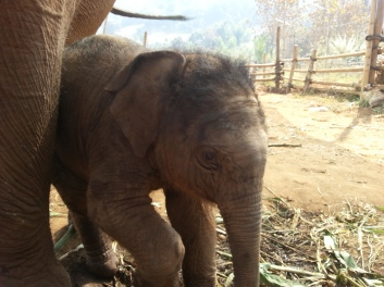 Happy Elephant Home- baby