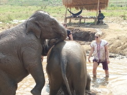 Happy Elephant Home- happy little eley's!